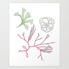 Seaweed and Lotus Root Art Print