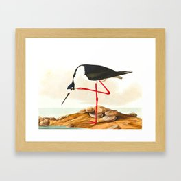 Long-legged Avocet Framed Art Print