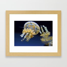 Jelly Fish Print Framed Art Print