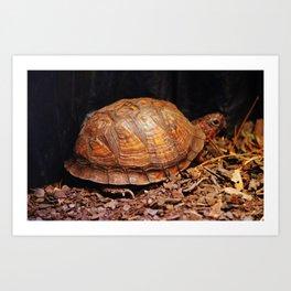 Beautiful Turtle Art Print