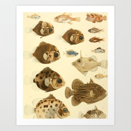 Fish of the Siboga Expedition (1913) - Armoreye Dories, Sea Robins, Bandfish Art Print