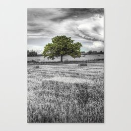 The solitary tree Canvas Print