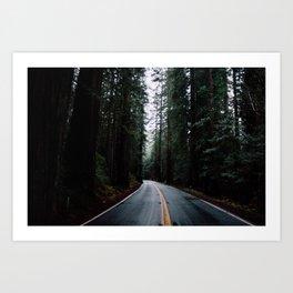 Redwoods pt. 1 Art Print