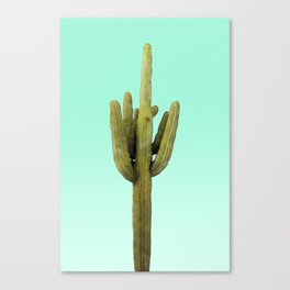 Cactus on Cyan Wall Canvas Print