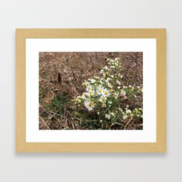 Tennessee Daisies Framed Art Print