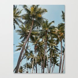 Find me under the palms Canvas Print