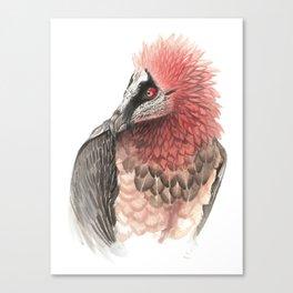 Bearded vulture Canvas Print