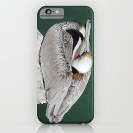 Brown Pelican at Rest iPhone Case