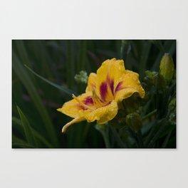 Arachnid on a Wet Flower Canvas Print