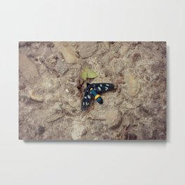 Amata phegea moth Metal Print