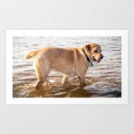 Dog at the Lake Art Print