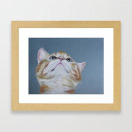 Juno. The Bird Catcher. Pastel Kitten Framed Art Print