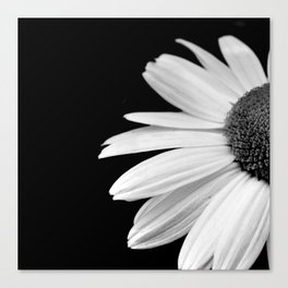 Half Daisy in Black and White Canvas Print