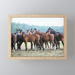 horses Framed Mini Art Print