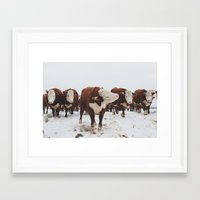 cows Framed Art Prints featuring Cows  by Haley Lauren