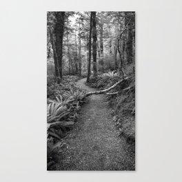 Kepler Track, Te Anau, Fiordland Canvas Print