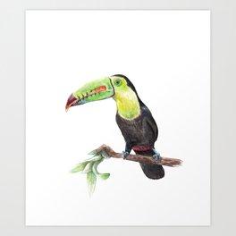 Watercolor Jungle Toucan Bird Illustration Art Print