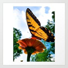 Swallowtail Butterfly on Zinnia Art Print