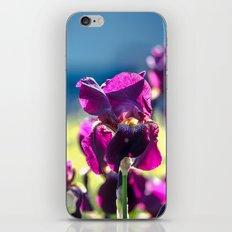 Irises iPhone & iPod Skin