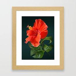 Red Darling Hibiscus Framed Art Print