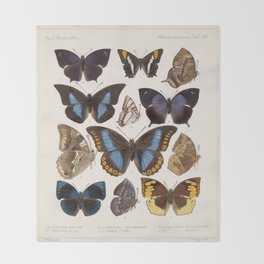 Vintage Scientific Insect Butterfly Moth Biological Hand Drawn Species Art Illustration Decke
