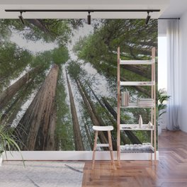Redwood Forest Adventure V - Nature Photography Wall Mural