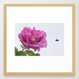 Irresistible Attraction Framed Art Print