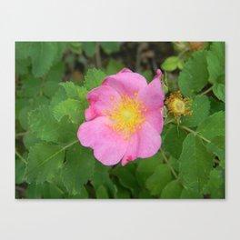 Wild South Dakota Rose Canvas Print