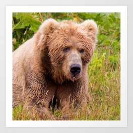 Brown Bear Kodiak Art Print