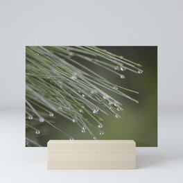 Raindrops on Pine Tree Macro Nature Photography - Anticipation Mini Art Print