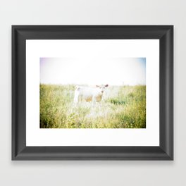 Not a lamb Framed Art Print