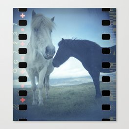 White horse brown horse Canvas Print