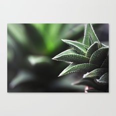 plant detail Canvas Print