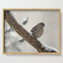 Facing the Storm (House Finch) Serving Tray