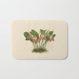 File:R. Warner & B.S. Williams - The Orchid Album - vol 01 - plate 005 Bath Mat