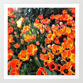 Red Tulips of Istanbul Art Print