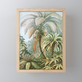 Vintage Fern and Palm Tree Art - Haeckel, 1904 Framed Mini Art Print