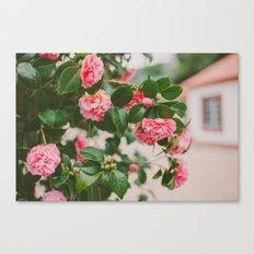 Camellias Canvas Print