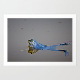 Blue Frogs 04 - Rana arvalis Art Print