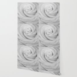 Single white rose close up Wallpaper