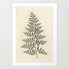 Naturalist Fern Art Print