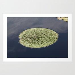 Crinkle Lily Pad Art Print