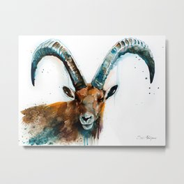 Alpine ibex Metal Print