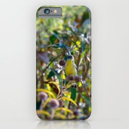 Lesser Goldfinch iPhone Case