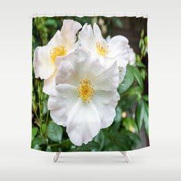 Camellia Bloom Flower Shower Curtain