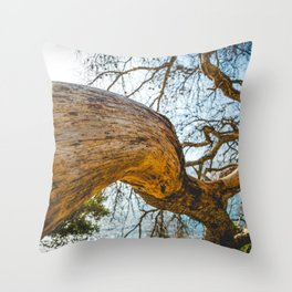 Maritime pine trunk in French Riviera in a sunny day Throw Pillow