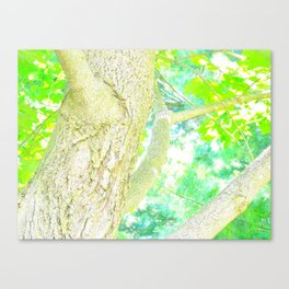 The Tree From My Backyard  Canvas Print