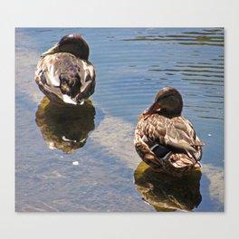 Santa Barbara Ducks 2485 Canvas Print