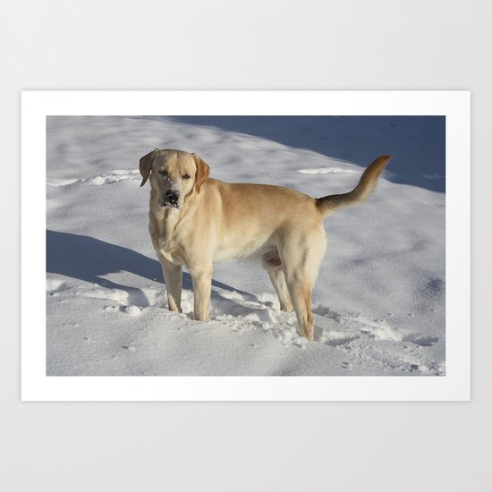 Labrador in the Snow Art Print
