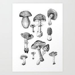 Fresh mushrooms Art Print